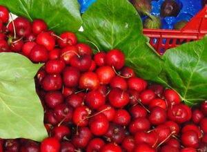 Frutos rojos a la vainilla y vinagre de modena